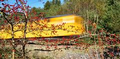 Autumn special at Bathpool Park (robmcrorie) Tags: bath pool park kidsgrove staffordshire hawthorn berries autumn class 73 yellow 73951 73952 nikon d850