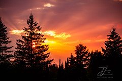 Sunset Rays (Wild.Woods.Photography) Tags: sunset rays sunrays silhouette trees pine sunrise orange bright evening sky clouds