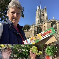 275 2019 sunshine, charity shops, garden (Margaret Stranks) Tags: 275365 365days 2019 stmaryschurch fairford quenington garden spider plants succulent muddyhand alstroemeria twister
