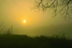 There comes the sun... (Alex Borst) Tags: nederland netherlands niederlande paysbas bomen trees mist fog water ochtend morgen morning matin holtingerveld wapserveen havelte uffelte diever wittelte zon zonsopkomst sun sunrise lever du soleil sonne sonnenaufgang