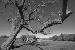 OverShadow (Tony Tooth) Tags: nikon d7100 sigma 1020mm tree deadtree imposing dominating overshadow barn farming grindon bw blackandwhite monochrome staffs staffordshire