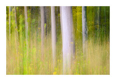 The colors of nature (Andreas Larzon Photography) Tags: andreaslarzon autumn autumncolors birch fineart grass grassfield icm intentionalcameramovement järfälla landscape landscapephotography leadinglines longexposure mapletree midday nature naturereserve nikonnikkorz24704s nikonz6 norrajärvafältet stockholmslän sweden typeofarea branch branches