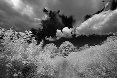 Summer Hedge Rows (david.hogan7) Tags: black white monochrome infrared canon 750d ir 720 converted efs 1018mm landscape fine art hedge rows tree sky clouds summer sunshine south downs national park way england uk wide angle