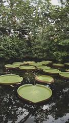 Diergaarde Blijdorp (Rudy 'RuudsteR' van de Leemput) Tags: diergaarde zoo blijdorp rotterdam