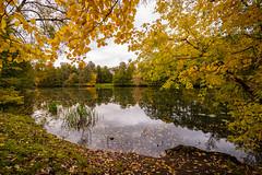 Autumn (gubanov77) Tags: autumn nature kuzminki moscow pond yellow trees leaffall landscape