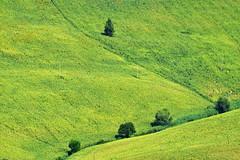 intrusi (luporosso) Tags: natura nature naturaleza naturalmente nikon nikonitalia nikond500 scorcio scorci campi campagna country countryside girasoli sunflowers marche italia italy