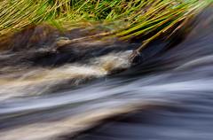 Grass Water Sept 2019 (kckelleher11) Tags: 2019 40150mm ireland olympus september em1 f28 flowing mzuiko omd stream water wicklow