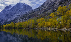 Reflecting On Fall Colors In The Eastern Sierras (Bill Gracey 25 Million Views) Tags: fallcolors autumncolors california easternsierras mountains color colorful aspen trees junelake reflections orange