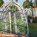 Plants Thrive in Raised Bed with Cold Frame