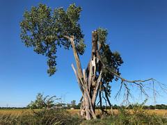It's Seen Better Days (tquist24) Tags: indiana outdoor blue broken cellphone farm field green iphone iphonex outside rural sky tree