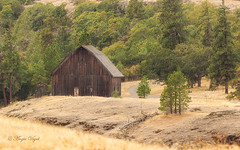 Barn in Tom McCall Nature Preserve (Angie Vogel Nature Photography) Tags: barn rowenacrest tommccallnaturepreserve columbiarivergorge nature