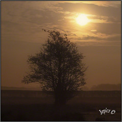 Standing Alone. (Picture post.) Tags: landscape nature green sunrise trees mist paysage arbre brume