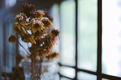 Sad and beautiful world (echokima) Tags: nikon d750 zeiss milvus 50mmf14 bokeh manualfocus wideopen flower beyondbokeh