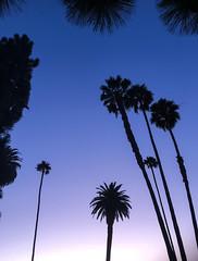 Beverly Hills, California (ChrisGoldNY) Tags: chrisgoldphoto chrisgoldny chrisgoldberg bookcovers albumcovers licensing lagunabeach laguna orangecounty california cali socal westcoast silhouettes silhouette beverlyhills losangeles la