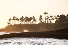 Sunset on Laguna Beach, California (ChrisGoldNY) Tags: challengefactory challengewinners chrisgoldphoto chrisgoldny chrisgoldberg bookcovers albumcovers licensing sony sonyalpha sonya7rii sonyimages lagunabeach california socal cali orangecounty laguna westcoast beach beaches playa water ocean sea pacific sunset sunsets palmtrees waves