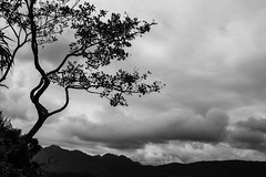 Island Life, Black & White, Hong Kong (Geraint Rowland Photography) Tags: blackandwhite landscapeimage tree island clouds weather minimal art artphotography leaves minimalist sharpislandlandscapeinblackwhitehongkong asia wwwgeraintrowlandcouk branch shades contrasts travel wanderlust poetic visithongkong sharpislandhongkong