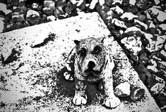 hond (delnaet) Tags: dog perro chien hond zuiderbegraafplaats gent gand ghent