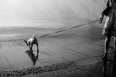 (empunkthapunkt) Tags: people woman animal dog streetlife streetphotography blackandwhite bw bwstreet water monochrome mood atmosphere light dark shadows menschen frau tiere hund strasenfotografie schwarzweiss schwarz weis wasser einfarbig brunnen stimmung atmosphäre schatten reflektion reflection munich münchen stachus fountain