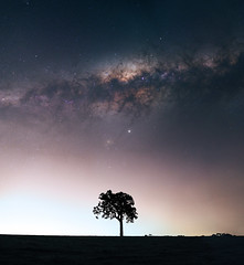 Milky Way at Bailup, Western Australia (inefekt69) Tags: bailup panorama stitched mosaic msice milky way cosmology southern hemisphere cosmos western australia dslr long exposure rural night photography nikon stars astronomy space galaxy astrophotography outdoor core great rift ancient sky 35mm d5500 landscape tree silhouette tracked ioptron skytracker light pollution