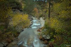 Camino abierto...270/365 (cienfuegos84) Tags: bosque arbol agua rio river otoño autumn