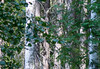 DSC_1037 (Adrian Royle) Tags: finland kuopio travel holiday nature wildlife bird grouse hazelgrouse forest path outdoors nikon bonasabonasia