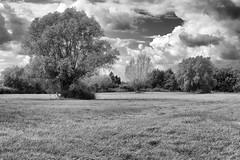breath (the ripped bystander) Tags: blackwhite meadow tree sky