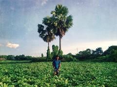 Farmers (Mridul Bangladeshi) Tags: photography iphonephotography iphone urban asia life people documenting documentaryphotography documentary agricultural agriculture bangladesh farmer farmers