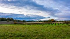 Untitled (Mikael Neiberg) Tags: landscape agriculture sky clouds autumn fall syksy pelto field evening eveninglight sigma1835mmdchsmart nikond7100 vantaa suomi finland uusimaa grass naturescolors