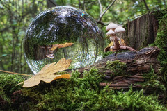 Hello in there (Parchman Kid (Jerry)) Tags: mushroom mushrooms leaves leaf autumn wood woods forest glass ball crystal frame framing green gold yellow brown reflection refraction refracting parchmankid sony a6500 jerry burchfield