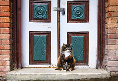Cute and beautiful cat sitting in front of the old wooden door on Istanbul, Turkey. (Natalia.Ka.) Tags: cat animal door sitting pet white cute domestic house beautiful background mammal feline black greece fur eyes portrait blue adorable young old nature kitten stairs wooden outdoor entrance street red kitty brown city travel grunge one outside face wood looking color turkey istanbul sleep rest window