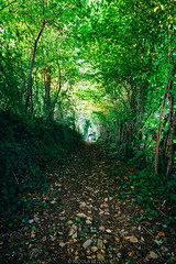 Underpass (Nicola Pezzoli) Tags: italy italia lombardia val seriana bergamo leffe gandino nature natura tunnel trees alberi cerida light