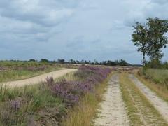 Strabrechtse Heide (joeke pieters) Tags: 1490740 panasonicdmcfz150 strabrechtseheide heeze noordbrabant nederland netherlands holland heide hei heath heathland heather landschap landscape landschaft paysage