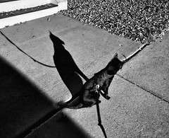 A LIttle Bastet in Every Cat (annette.allor) Tags: cat bastet shadow