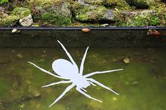 Water spider silhouette (UCD Staff Photography Club) Tags: ucd dublin ireland university bloom garden spider reflection pond moss rocks