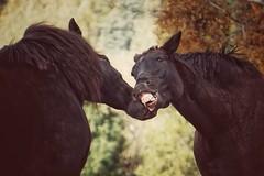 Big Love (***étoile filante***) Tags: horses horse pferd pferde animal tier emotions natur nature autumn herbst moment augenblick life leben sonyilce6000 bokehlicious bokeh