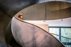 The Girl in the Curve (Andy J Newman) Tags: london street art candid collection curve euston frame gallery geometric ginger girl lady mirrorless nikon wellcome wellcomecollection woman young z6