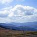 Blue Vosges