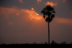 it is sunset (viveksanand) Tags: sunset sun evening sky tree rays sunrays clouds nature silhouet