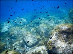 Plongee Porto Pollo DSCN1335 eff aquarelle (michele.muno) Tags: sea mer underwater corse corsica plongée portopollo