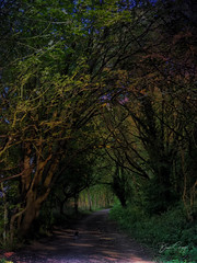 Strolling the Spofforth-Spofforth to Wetherby Disused Railway #landscapephoneography #landscape #yorkshire #disusedrailways (Dave Gray Landscape Phoneography) Tags: landscapephoneography landscape yorkshire disusedrailways