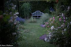 Summer garden (Hans Olofsson) Tags: skammelstorp garden trädgård earning light kvällsljus flowers rosor roses blommor summer