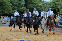 Avoiding the Clutter (meniscuslens) Tags: horse horses hounds heroes event charity police arena buckinghamshire aylesbury high wycombe princes risborough