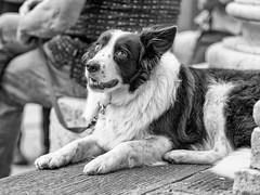 Fearful dog (Riccardo Palazzani - Italy) Tags: brescia dog cane pet perro olympus fear paura timore