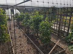 20190922_133656 (When The Levée Breaks) Tags: beechgrovegarden aberdeen uk