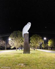 The Owl Statue on Friday morning (garydlum) Tags: owlstatue publicart canberra australiancapitalterritory australia