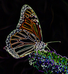 Monarch Magic (kfocean01) Tags: butterflies nature photomanipulation manipulation glowingedges filter insect flowers art creativephotography