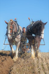 The Ploughing Match (Henry Hemming) Tags: ploughing match mayfield horsedrawn horses horse plough field autumn