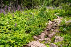 Look at where you are going (Pernilla Lindblom) Tags: sverige landscape nature sweden laponia natur växtsverige kungsleden summer fjäll vandring skog forest hiking fjällvandring outdoors vandra uteliv friluftsliv trekking thekingstrail