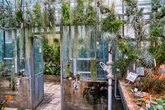 Tillandsien (KaAuenwasser) Tags: hdr botanischergartenkit botanischergarten kit tillandsien pflanzen unterglas glas tür grün gewächshaus karlsruhe