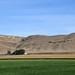 Center Pivot irrigation on Barlow Farm